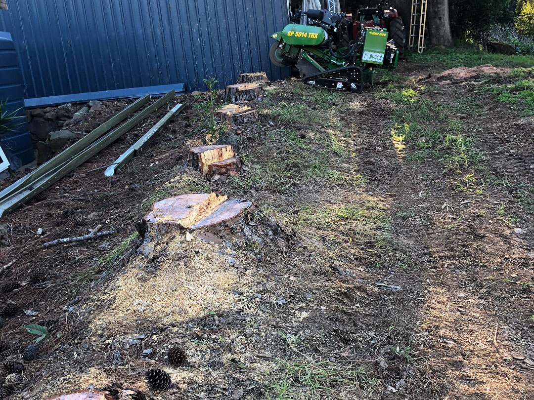 Stump Grinding, tree Stump removal gold coast, tree stump removal service