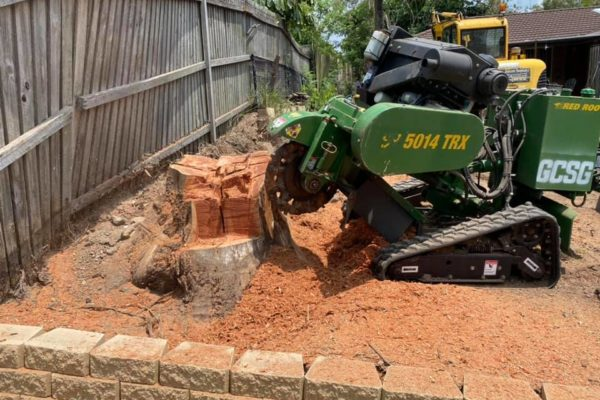 tree-stump-removal-tree-root-removal-by-grinding-gold-coast