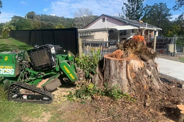 large-tree-stump-being-removed-by-grinder