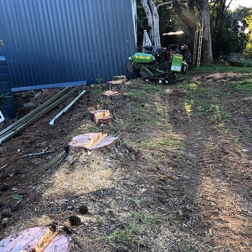 six-tree-stumps-and-stump-grinder-tree-stump-removal-gold-coast